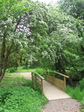 Photo:A new path and bridge giving access to the orchard in 2004